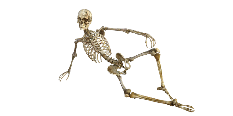 transparent stock Png skeleton images pluspng. Bones transparent.