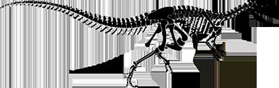 banner library library Brantworks skeletons allosaurus fragilis. Bones transparent dinosaur
