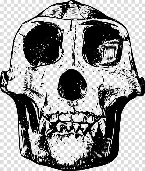 png royalty free download Bones transparent simple. Gorilla skull black animal