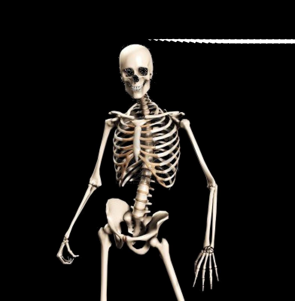 freeuse library Human skull bones anatomy. Bone transparent skeleton