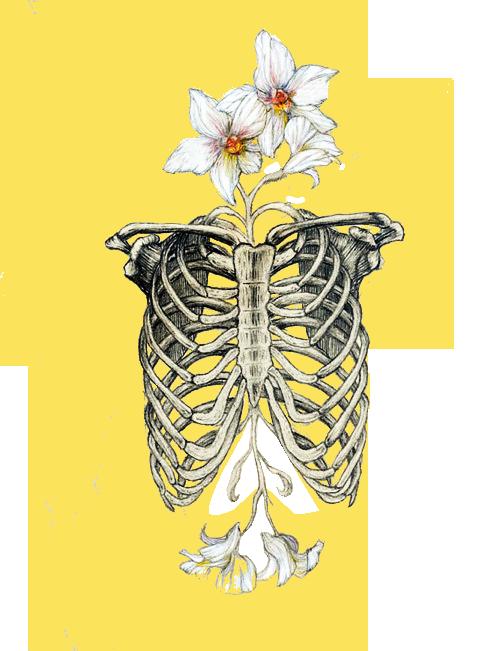 clipart download Desenhando o mundo via. Bones transparent tumblr