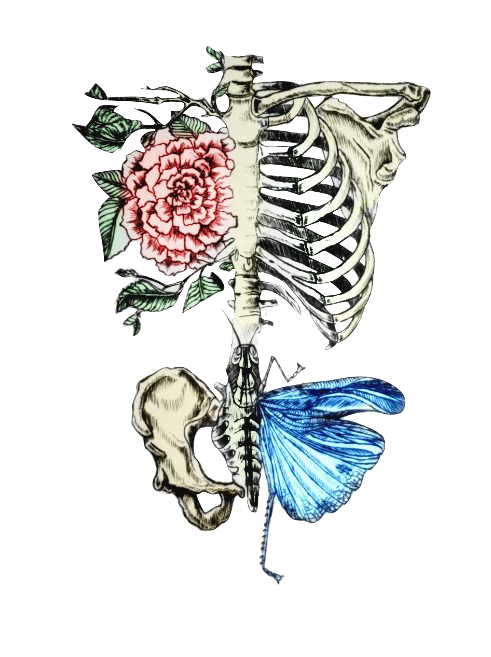 clip art download Bones transparent tumblr. Image about life in
