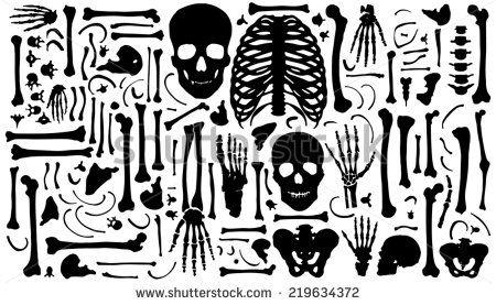 banner free download Bones vector art. Skeleton free for download