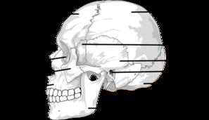 picture Label the of skull. Bones vector blank