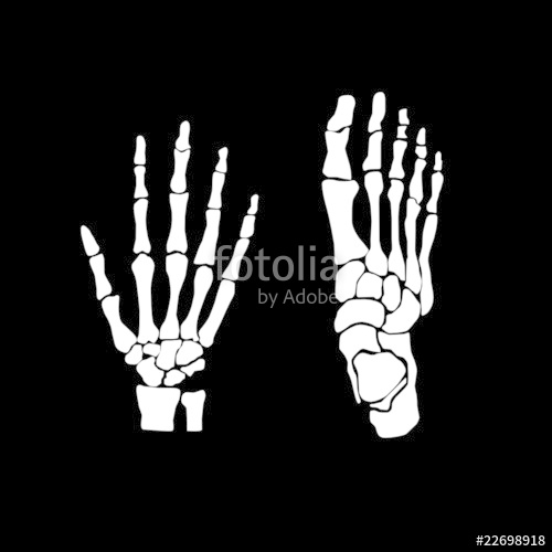 clip black and white download Bones vector illustration. Hand and feet stock