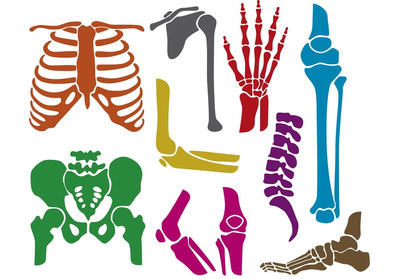 download And joints vectors silhouettes. Bones vector joint