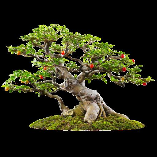 jpg library download Bonsai tree Widget