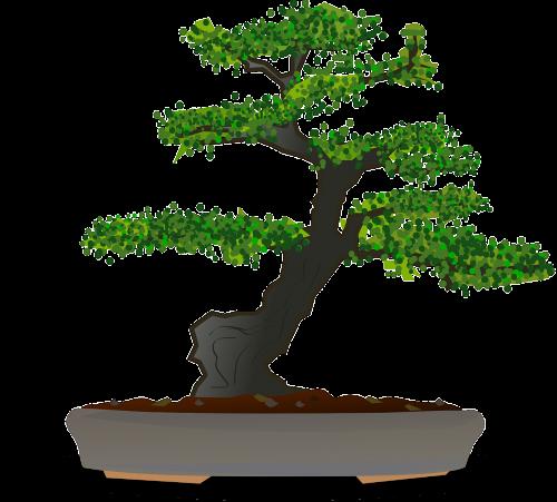 clip art royalty free bonsai drawing cascade #90437713