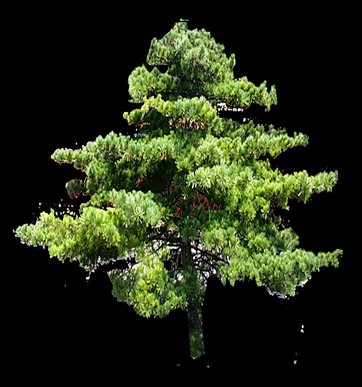 clipart bonsai drawing seascape #92353181