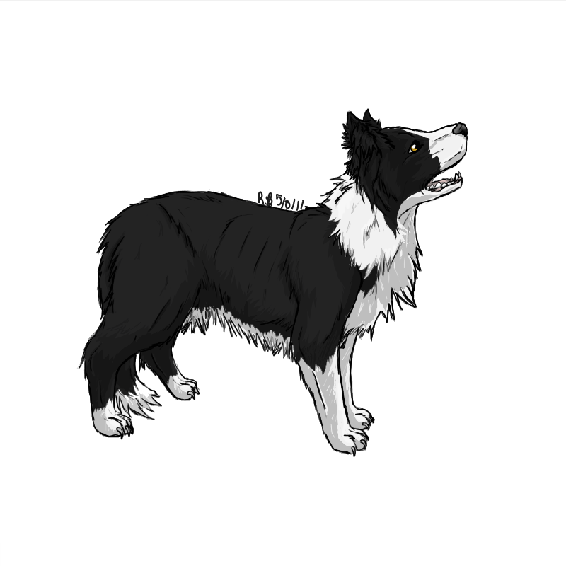 picture freeuse Collie drawing. Border by stormfalconfire silhouette