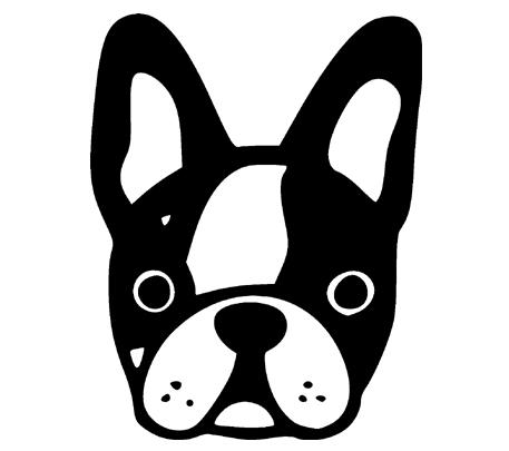 vector transparent . Boston Terrier 4
