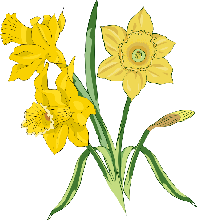 banner free stock Bouquet clipart daffodils. Web design clip art