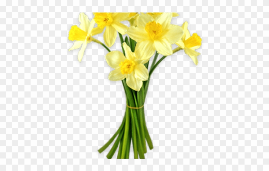 banner download Bouquet clipart daffodils. Download for free png.