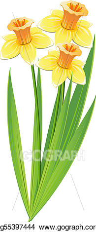 stock Vector art of drawing. Bouquet clipart daffodils.