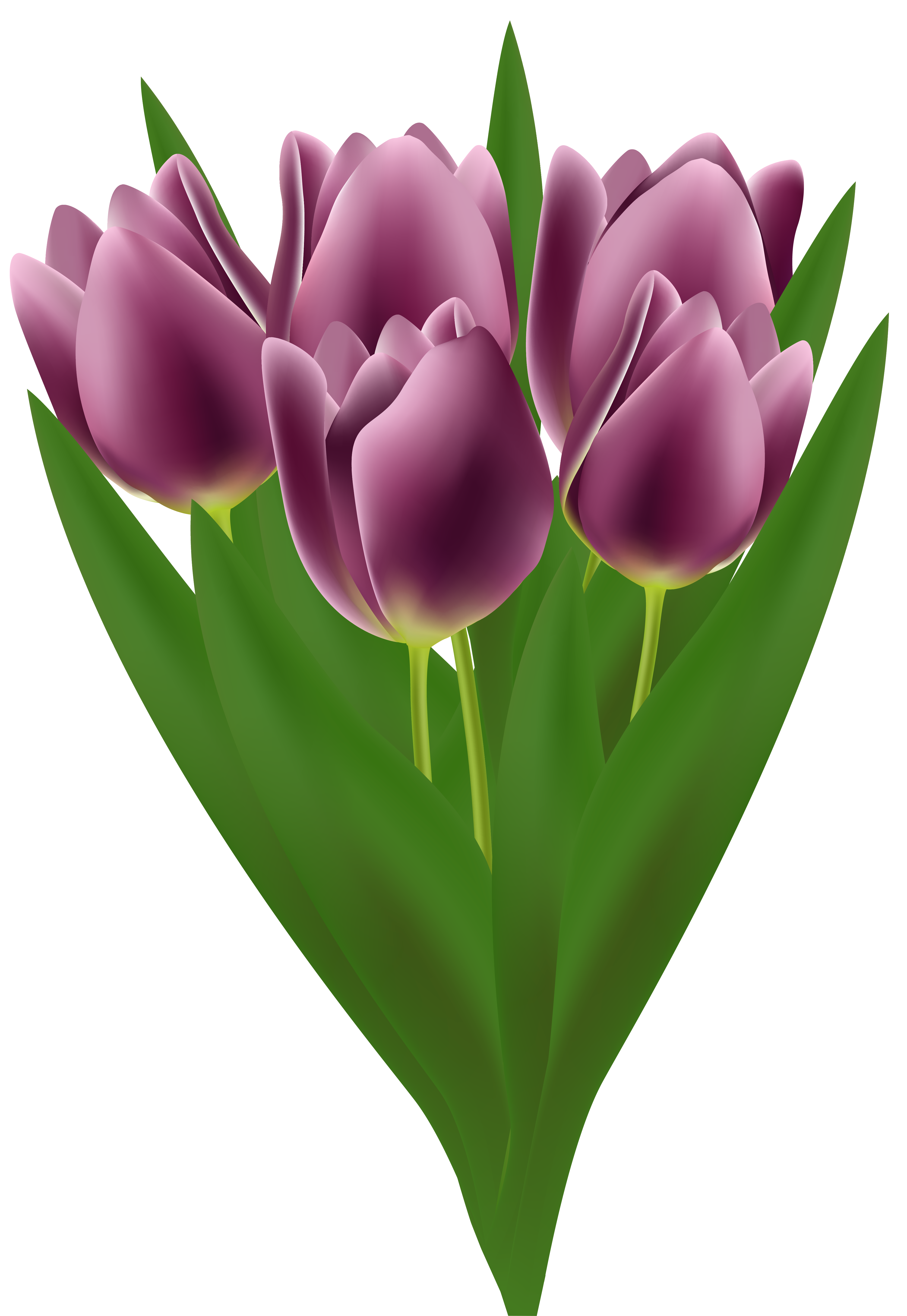 svg freeuse download Bouquet clipart tulip. Tulips transparent png clip