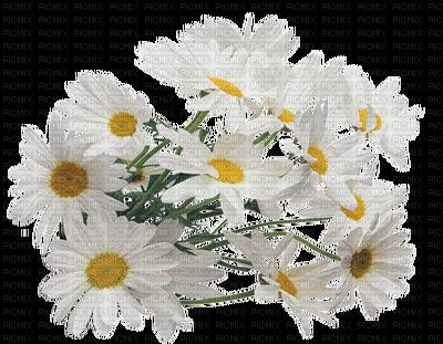 clip royalty free stock Daisy bouquet