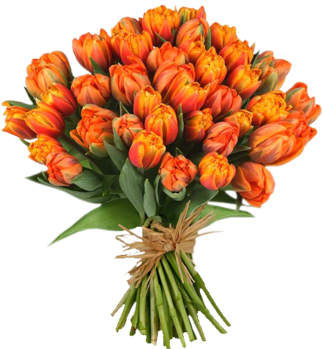 graphic library Bouquet of flowers PNG images free download