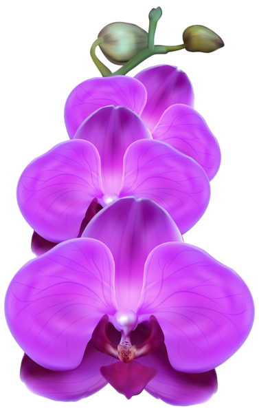 graphic royalty free stock Purple Orchid PNG Transparent Clip Art Image