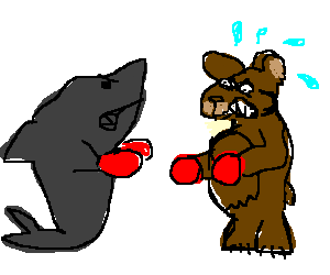 image library library Shark boxing with grizzly bear