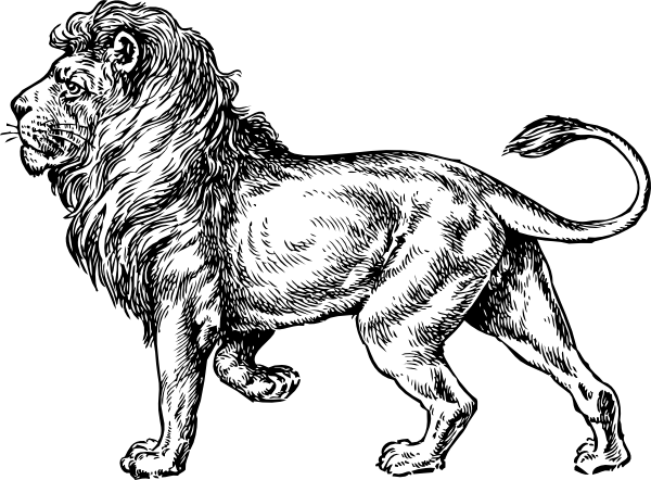 svg royalty free stock Drawing charcoal lion. Outline google search art