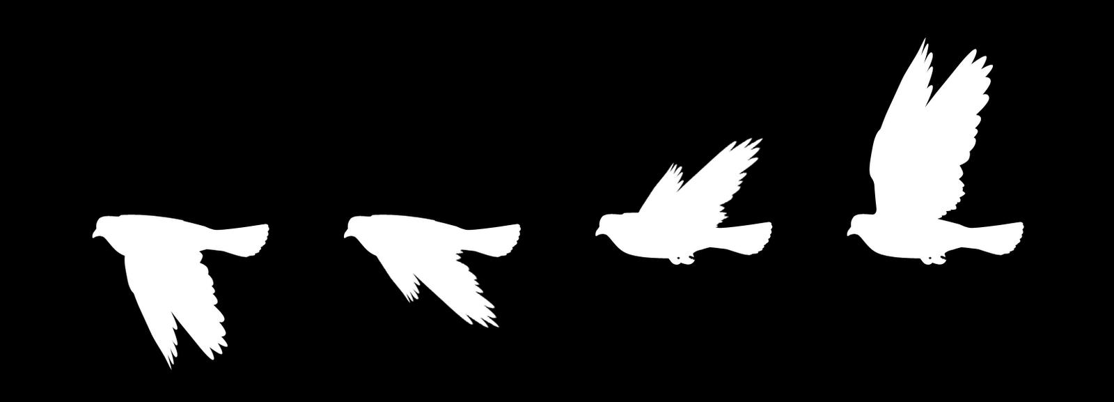 banner royalty free download Vector books flying. Simple bird vectors google
