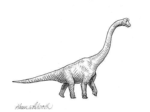 vector transparent brachiosaurus drawing long neck dinosaur #144504083
