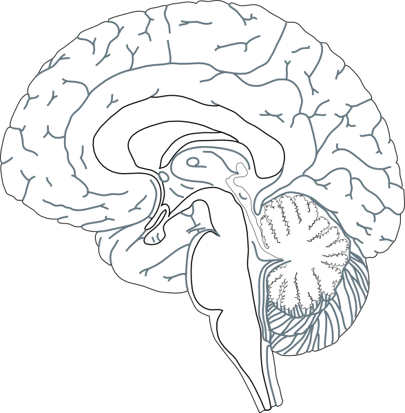 picture free stock Brain black and white clipart. Inside view clip art