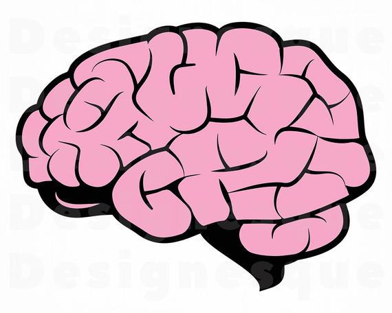 vector transparent Brain clipart. Svg mind files for