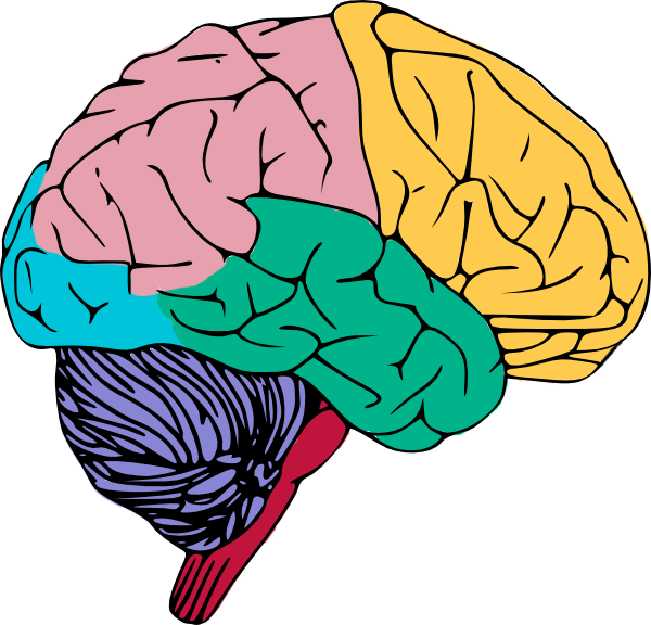 graphic royalty free download Brain clipart. Free to use public
