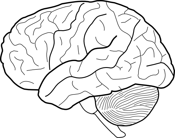 picture transparent stock Black and white clip. Brain clipart