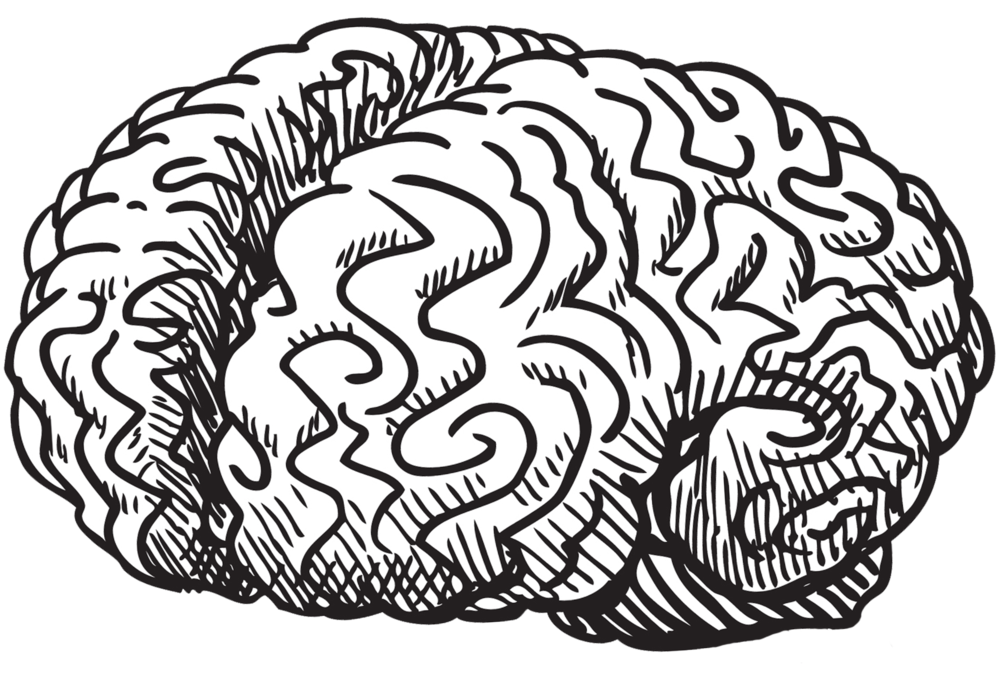 picture free stock Blog el autob s. Brain clipart doodle