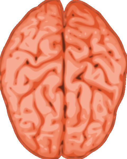 clip art library download Brain clipart human brain. Clip art at clker
