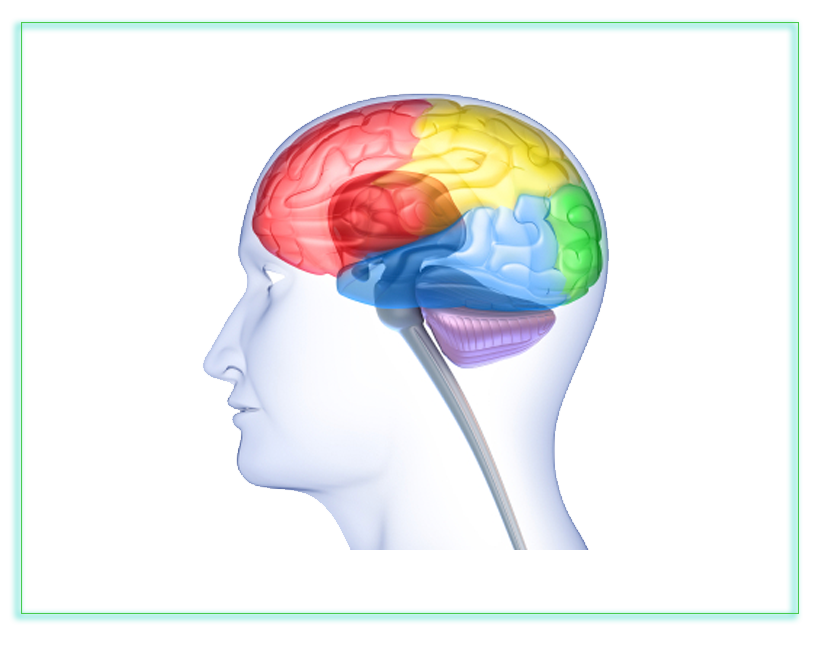 picture royalty free stock Neuroimaging and privacy a. Brain clipart neuroscientist