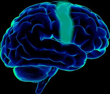 graphic free stock Brain clipart neuroscientist. Halo neuroscience