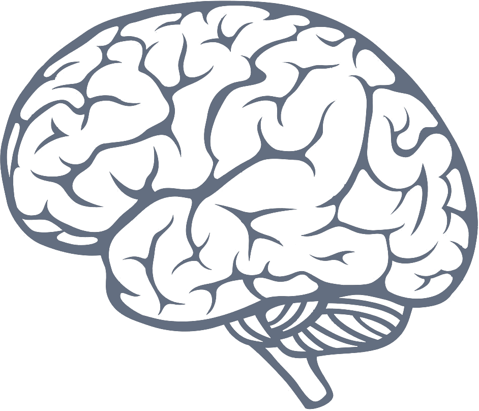 picture Brain PNG Transparent Brain
