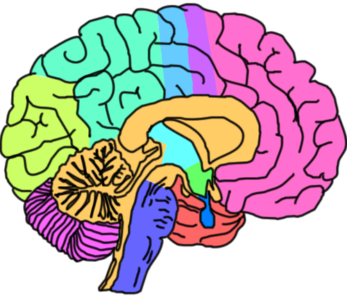 royalty free Brain clipart psychology. Mental health free on