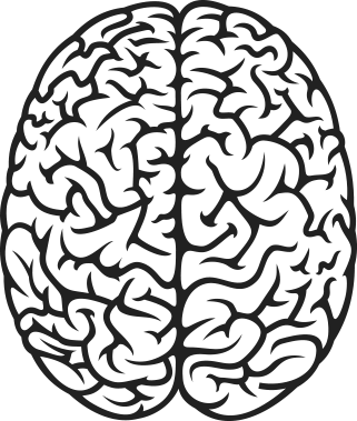 freeuse library Brain clipart top.  collection of view