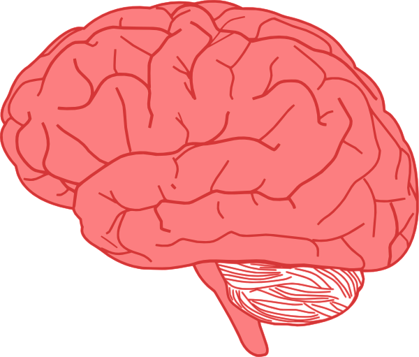image free library Brain clipart. Clip art at clker.