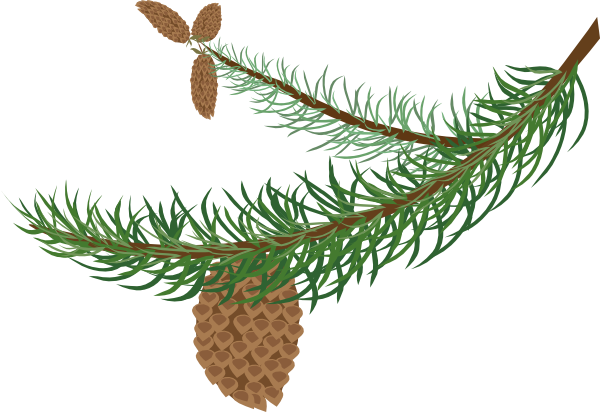 png black and white Fir free on dumielauxepices. Branch clipart bough