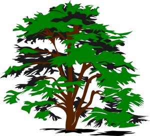 vector royalty free library Branch clipart chalkboard. Simple tree clip art