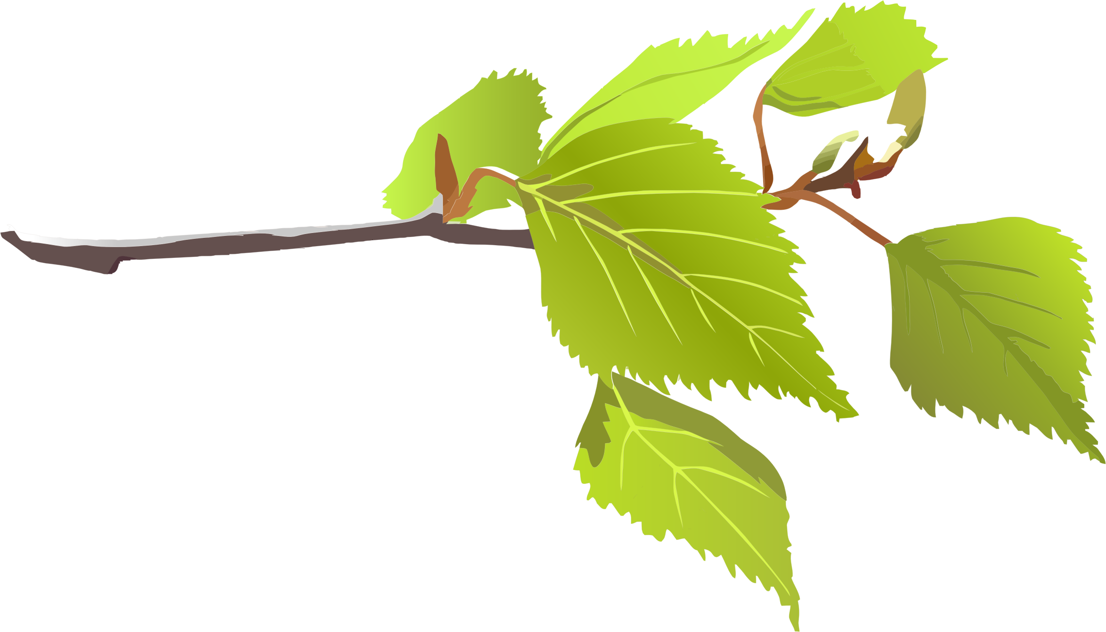 svg freeuse And leaves big image. Branch clipart green