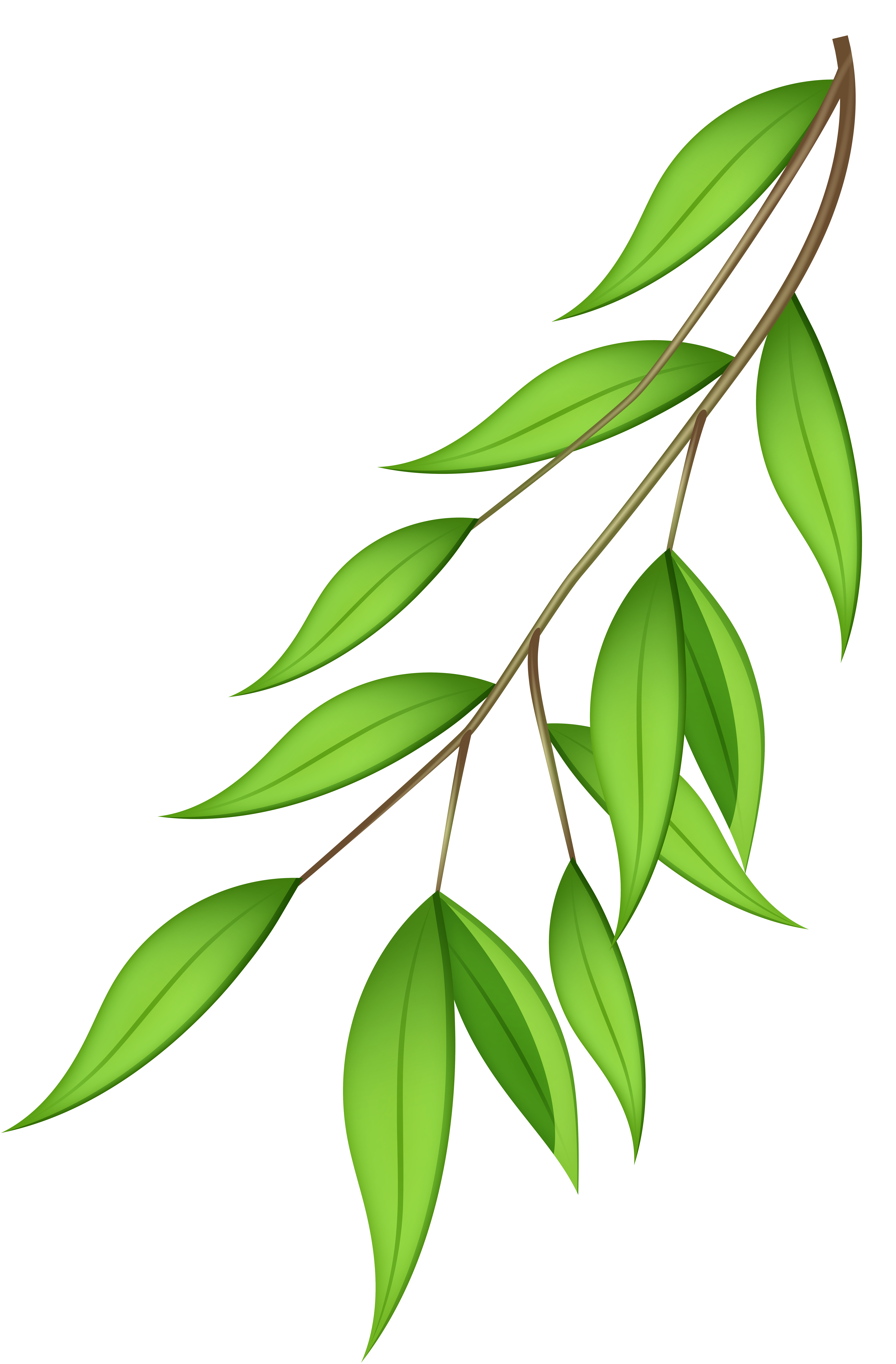jpg library stock Png transparent clip art. Branch clipart green