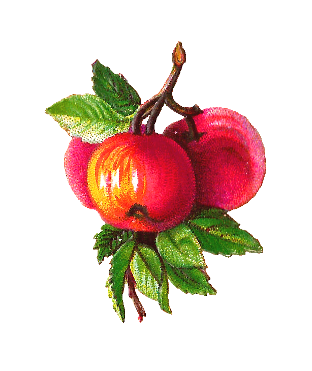 clip Apple and plum clip. Branch clipart vintage