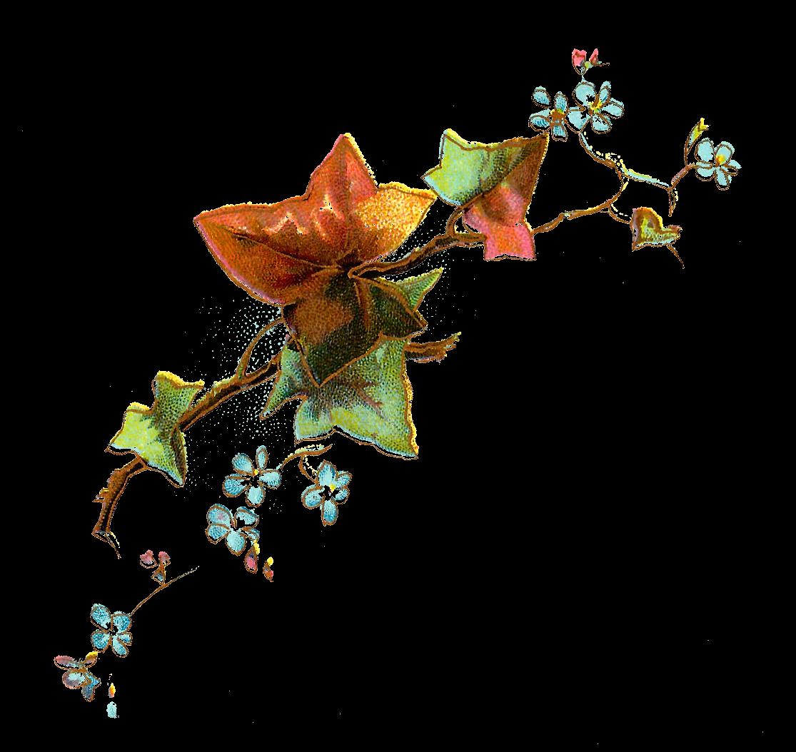 svg black and white download Antique images free flower. Branch clipart vintage