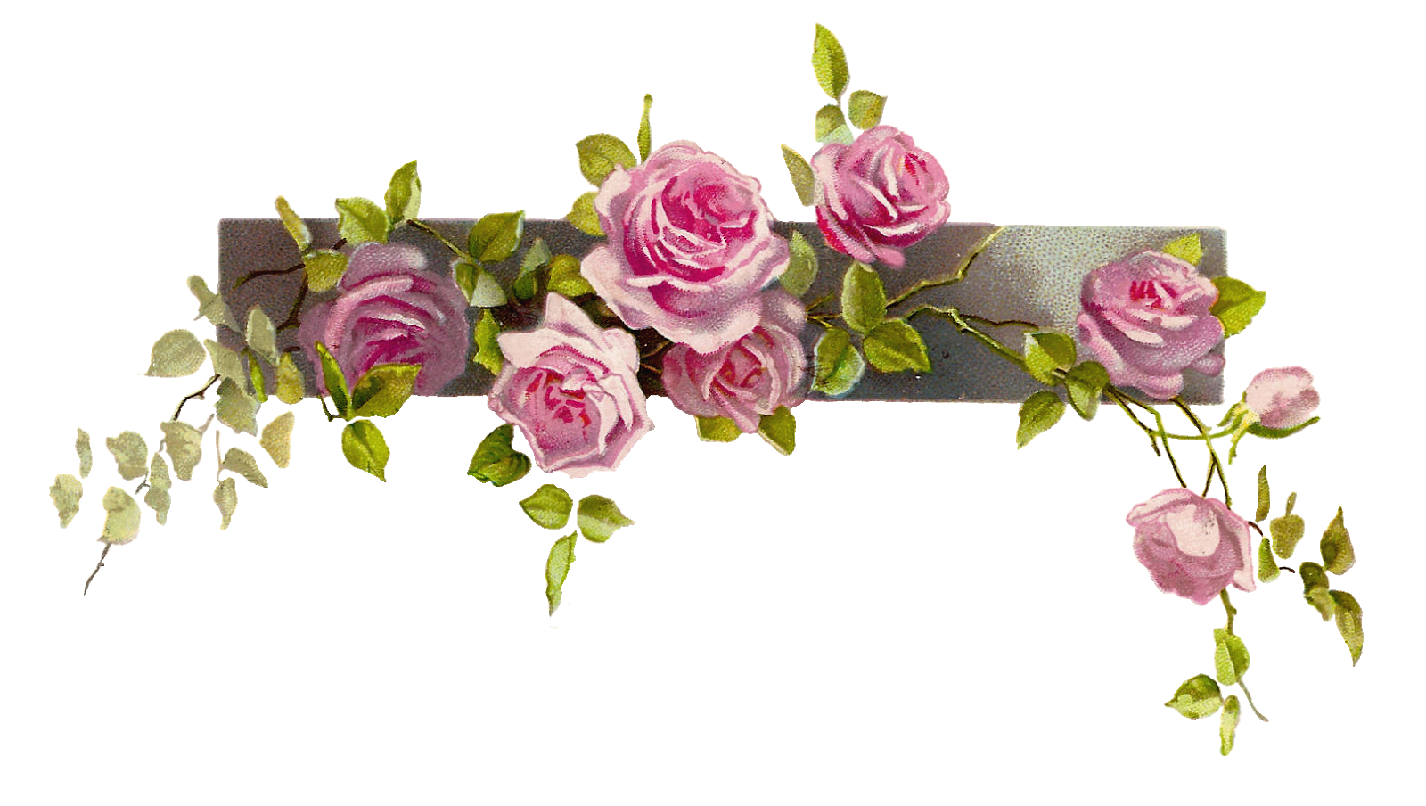vector royalty free Vector dividers rose. Flower graphic vintage pink