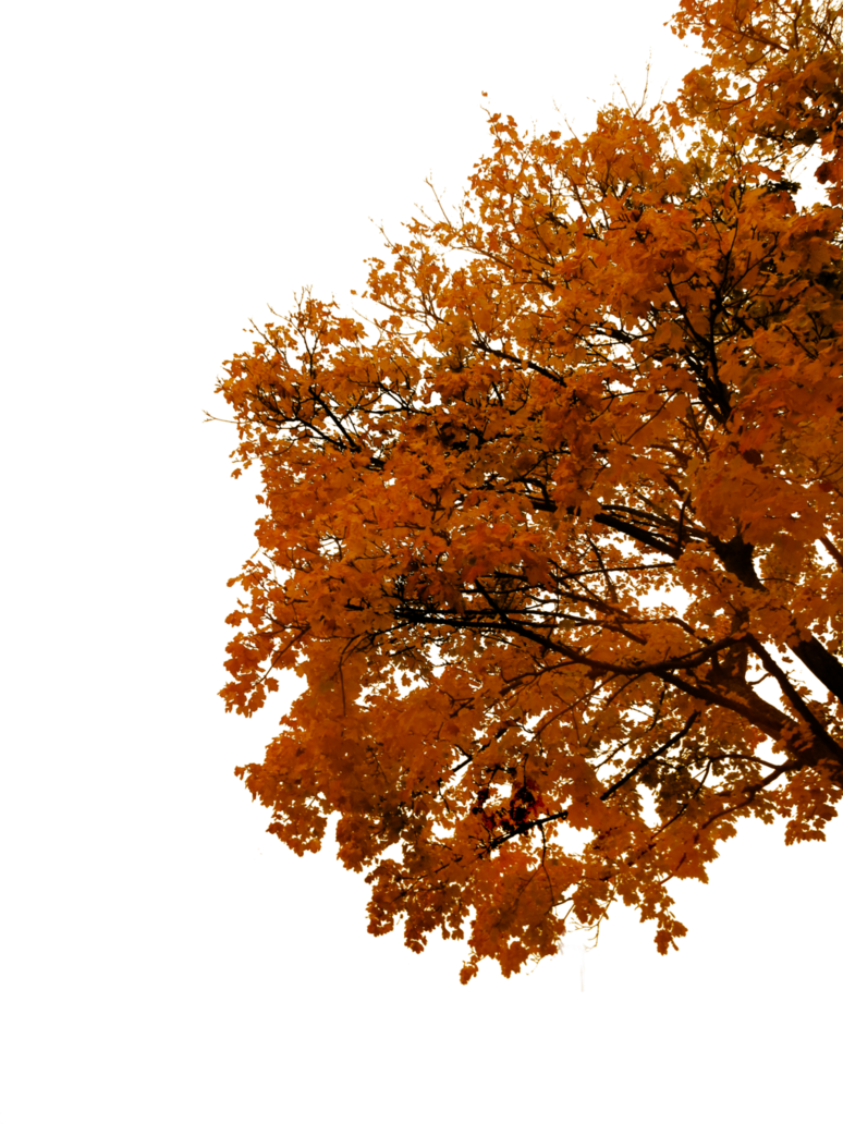 png free stock Fall transparent branch.  autumn tree cutout