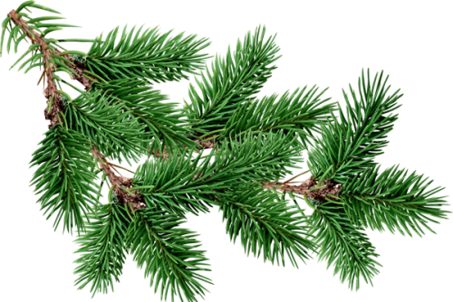 png freeuse library transparent branch christmas tree #116571695