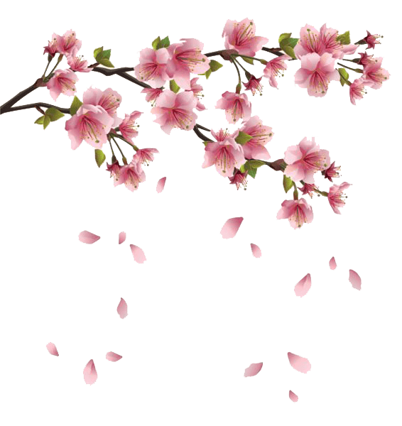clip free download transparent branch flower #116570065