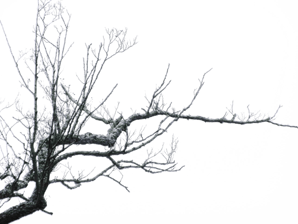 stock Trees transparent PNG images