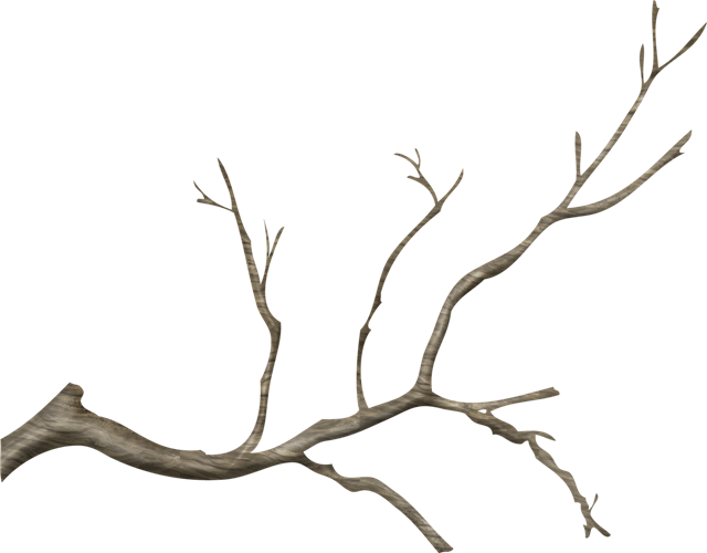 jpg library stock transparent branch real tree #116572939